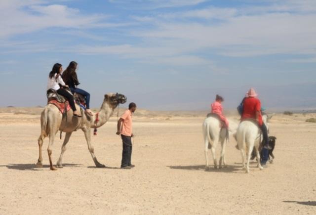 טיול גמלים במדבר